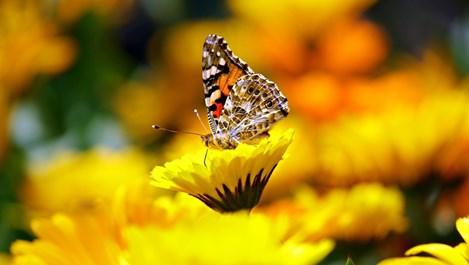 10 неща в природата, които нямат обяснение