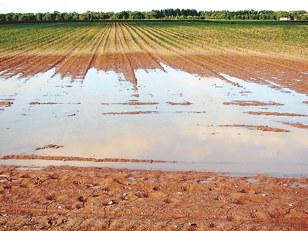 След обилните валежи краищата на полетата често се наводняват
