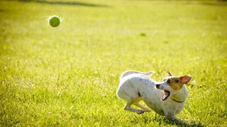Кучетата побеляват от стрес