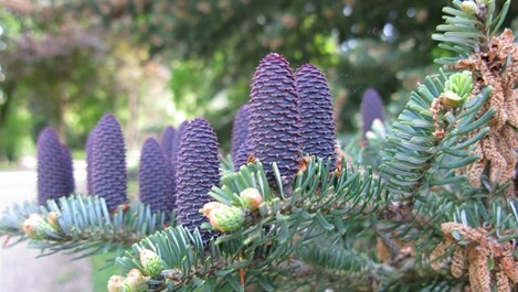 Вечнозелени растения за подреден двор