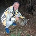 Орлето спаси еленче