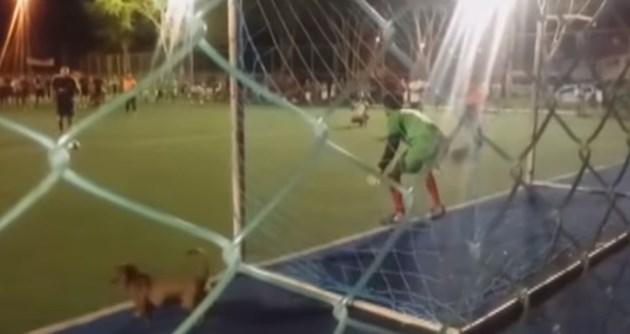 Кучета вратари спасяват сигурни голове (Видео)