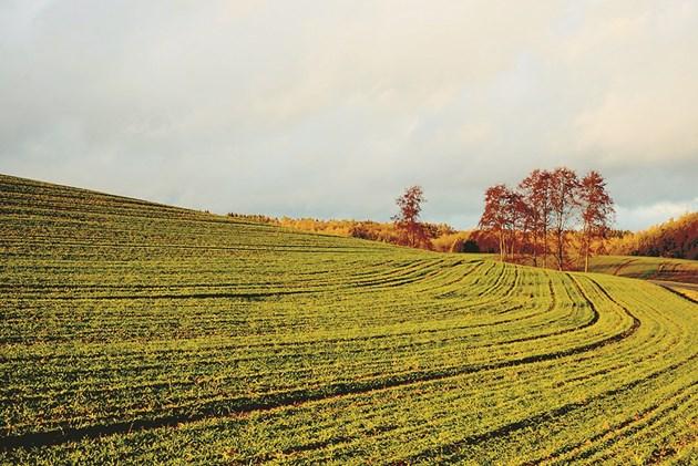 Някои от торовете, които се използват за подхранване на културите, увеличават киселинността на почвата