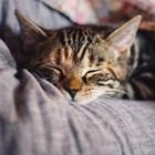 Любопитни факти по случай Световния ден на котката