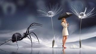 Как да държим паяците и други насекоми далеч от дома