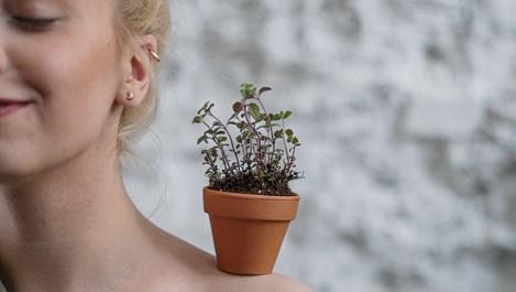 6 ползи от канелата за растенията