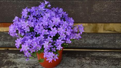 Особености на пресаждането на цветя в саксии