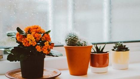 10-те стъпки за прибиране на цветята