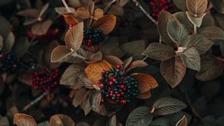 Този малък плод прави чудеса за здравето (+рецепта)