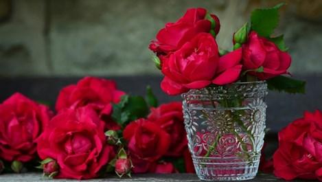 Розата пази черния дроб и венците
