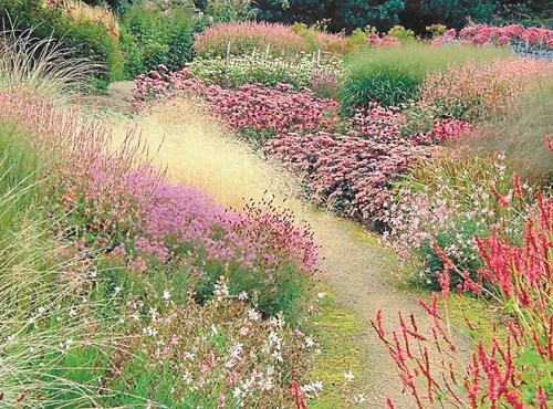 Декоративни треви в дизайна на градината