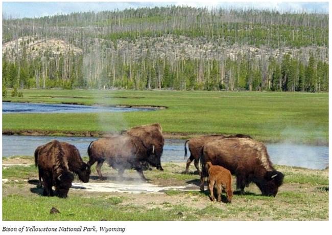 Националният парк Йелоустоун, Уайоминг Снимка: forbes.com