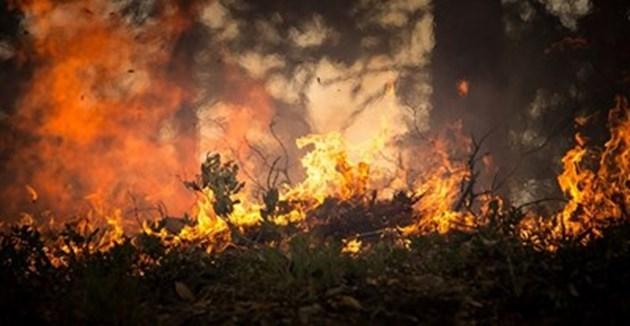 Над 50 горски пожара бушуват в Гърция