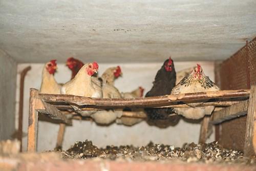 6 съвета за компостиране на птичи тор