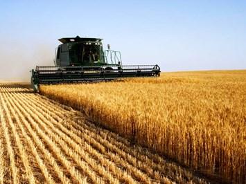 Балансите на 8-те най-големи износителки на зърно се свиват