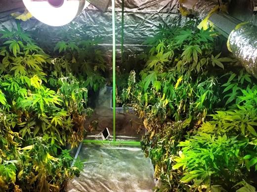 Хотел в Слънчев бряг превърнат в наркоферма, специални филтри убивали миризмата