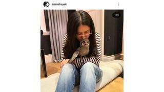 Актрисата Салма Хайек осинови сова