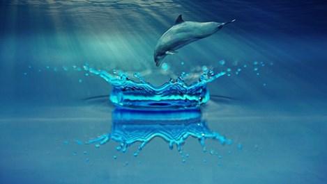 Делфините си викат по име и спят наполовина