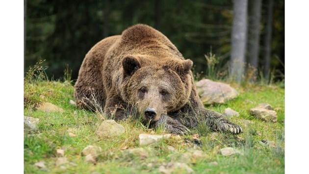 Местят мечка далеч от населеното място.