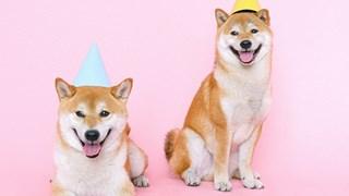 Колко опасна е кучешката слюнка?