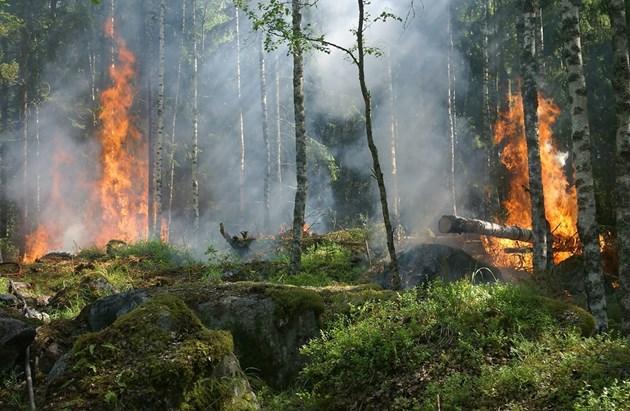 Бразилия праща армията да се бори с големите пожари в Амазония