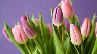Цветя, които ни вредят