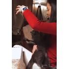 Радост дразни черна котка