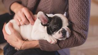 Да предпазим кучето си от грип