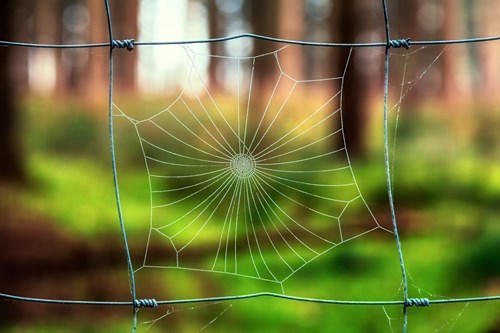 Ако не обичате паяци, отглеждайте растения