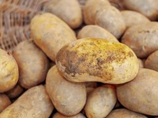 Оставят за само здрави картофи