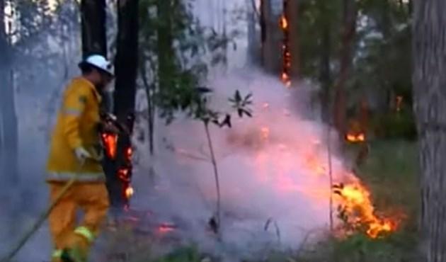 Хиляди декари гори пламнаха в Австралия (Видео)