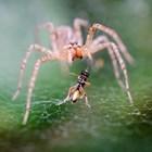 """Кръстиха нов вид голокраки паяци на щурмоваците от """"Междузвездни войни"""""""