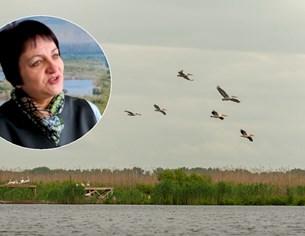 """Директорът на резерват """"Сребърна"""" Елена Илиева: Имаме ново потомство уникални пеликанчета"""