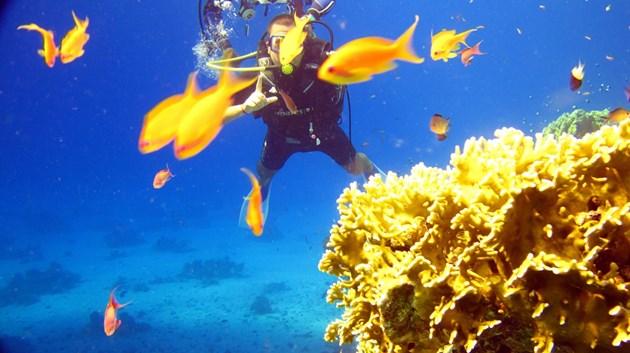 Червено море е раят за гмуркане