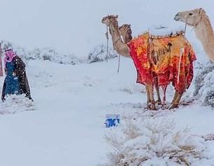 Януари довя сняг в Сахара
