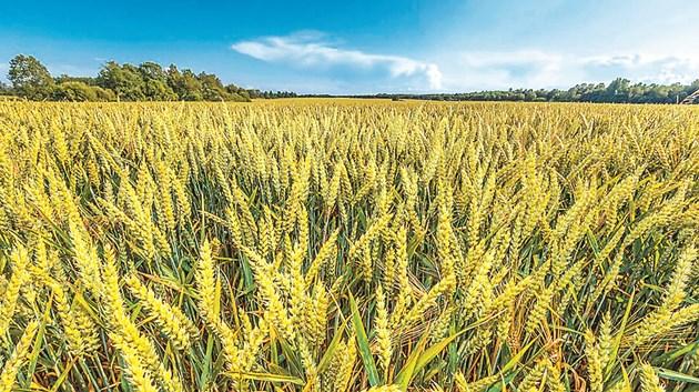 За да си гарантирате отлични добиви, трябва да водите редовна растителна защита