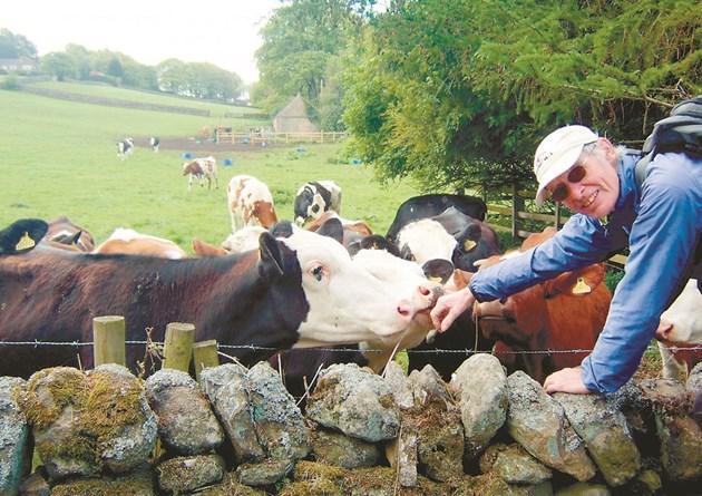 """ФАО призовава фермерите да използват """"екологични крави, които ще спасяват света"""" от глобалното затопляне. Защото сега крава с тeгло 550 кг изхвърля от 800 до 1000 л вредни газове"""