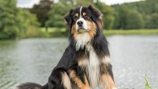 Вашето куче според зодията ви