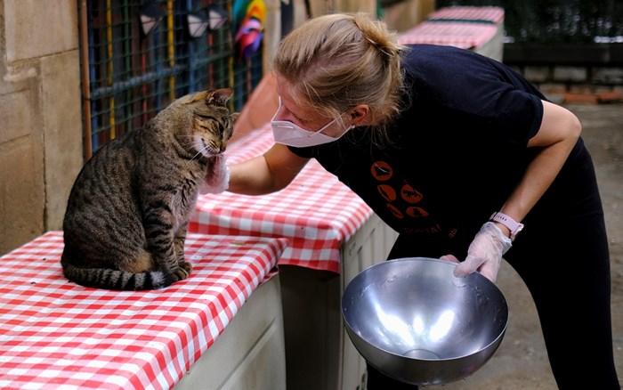 Протеинът от буболечки е подходящ за котки с чувствителен стомах.