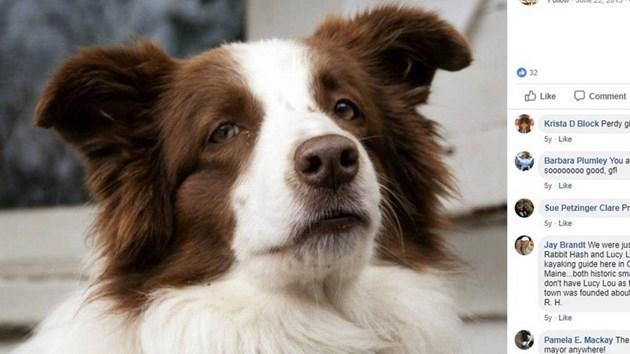 Почина Луси Лу - кучето, което беше кметица на американски град