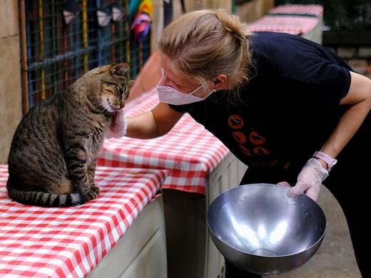 Буболечките влизат в менюто на котките и кучетата
