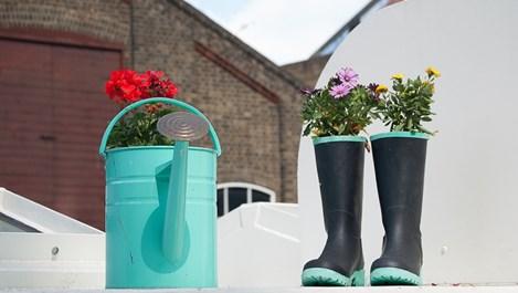 Подхранване на цветята с необичайни естествени материали