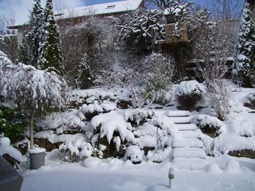 Защитни мерки за цветята през зимата