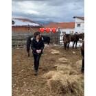 """Веселка от """"Фермата"""" си купи коне"""
