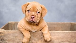 11 правила при избора на куче