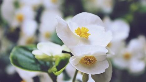Цветя, които се садят сега