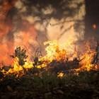 Голям пожар в Южна Италия, затвориха училища
