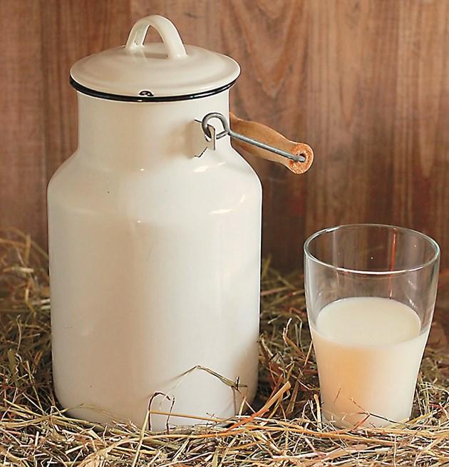 Първите 3 месеца след отелването са най-продуктивните по отношение на количеството мляко. Затова трябва много да внимавате с какво храните кравата.