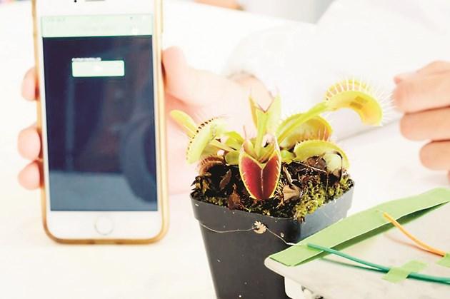 Използвайки смартфон за предаване на електрически импулси с определена честота към устройството, екипът предизвика Венерината мухоловка да затвори листата си при поискване за 1,3 секунди