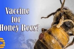 """Последната """"спасителна мярка"""", която също напоследък се коментира, е да се ваксинират медоносните пчели срещу заболявания, свързани с колапса на колонии, метод (наречен PrimeBEE)"""